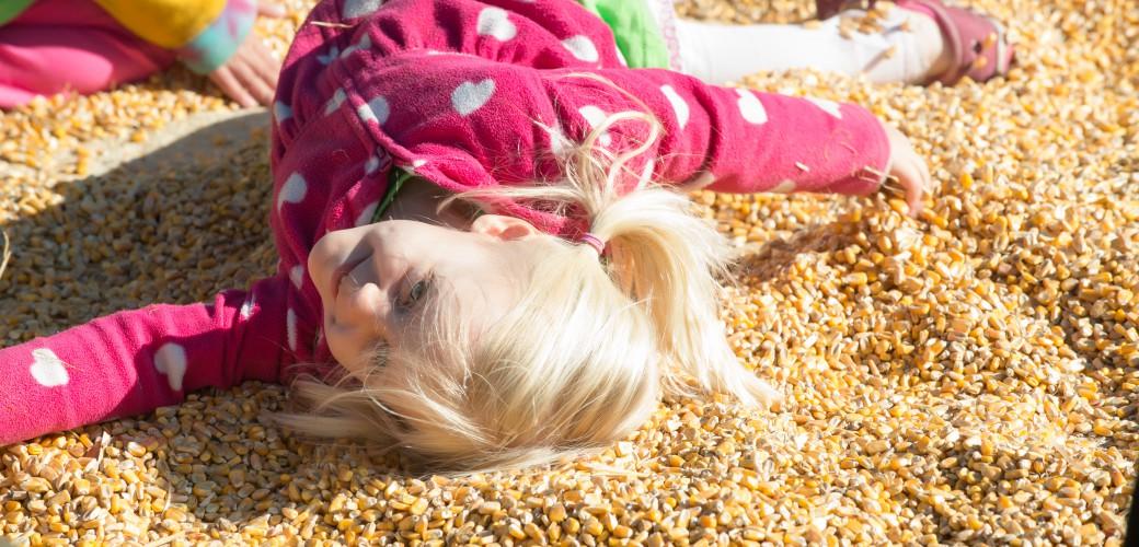 Corn Maze Attractions